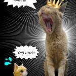 猫劇場《モッチですぢゃ!》第2回(PS版)「いのちの切り捨てを許さない! 緊急院内集会」
